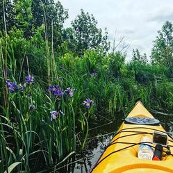 Mink River Eco Kayak Tour